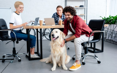 Dogs in the Workplace: A Quick Guide to Office Pet Policies