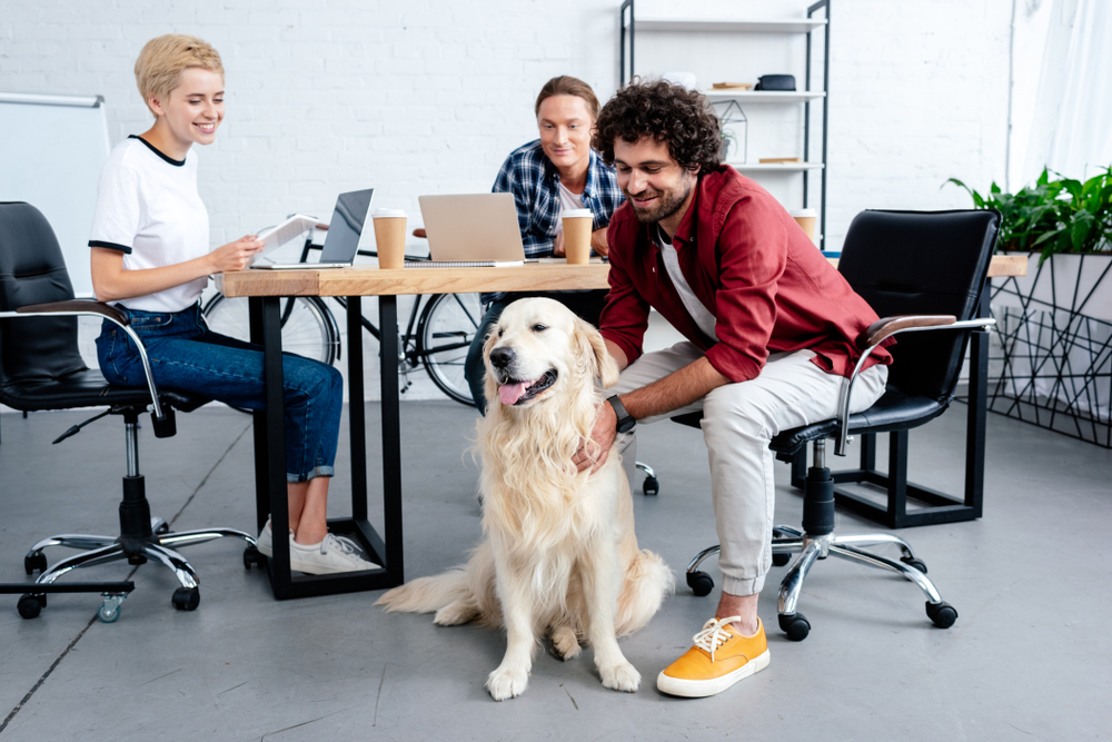 employees playing with dog at work